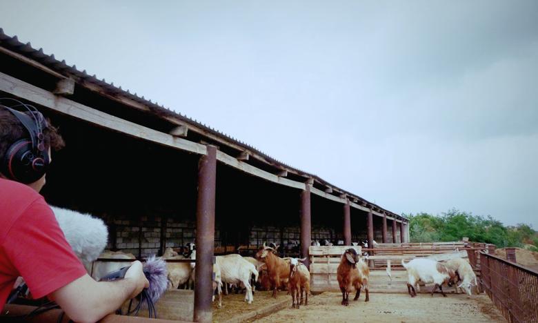 animal farm free premium sfx library